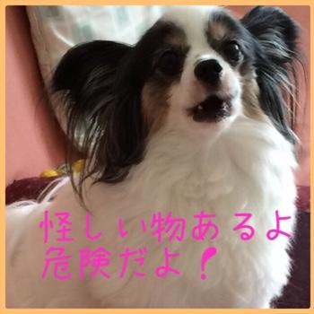 fc2blog_20150518114445737.jpg