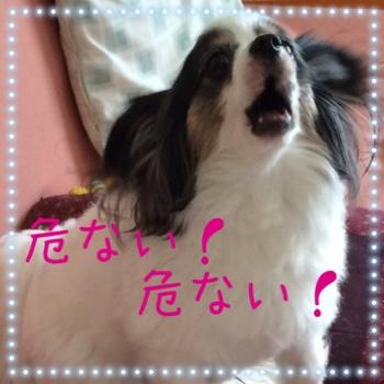 fc2blog_20150518114503146.jpg