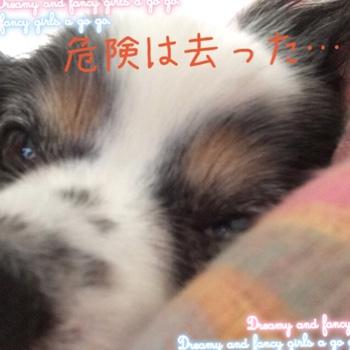 fc2blog_20150518114607aab.jpg
