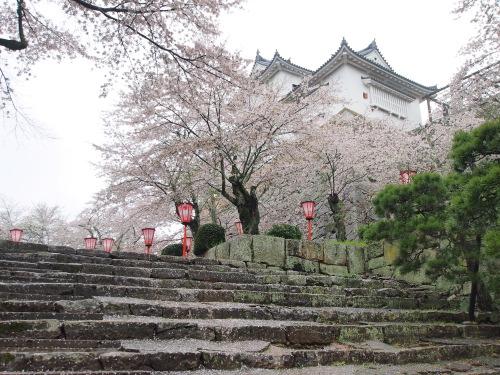 2015鶴山公園桜3