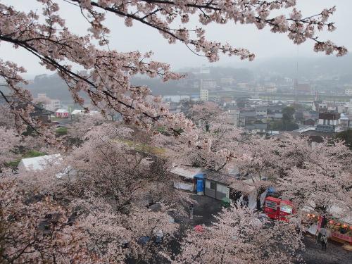 2015鶴山公園桜4
