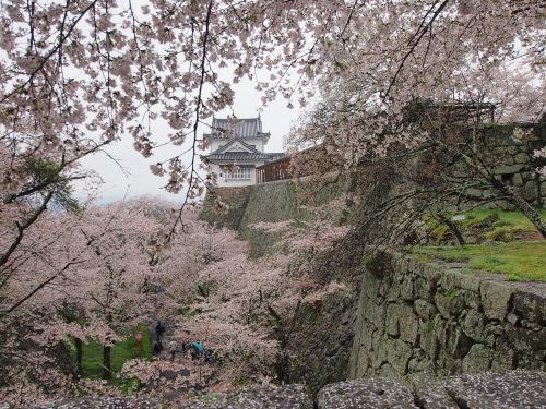 2015鶴山公園桜14