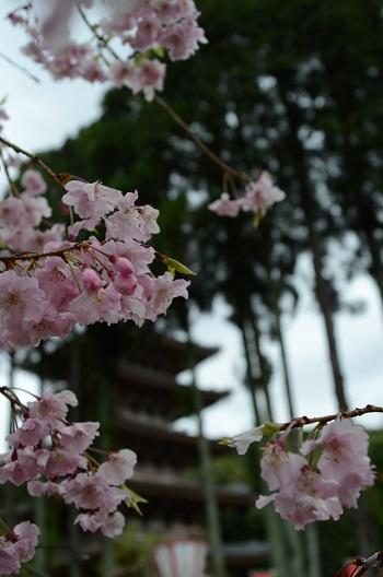五重塔を飾る花