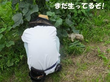 さつま芋植え27年終了2
