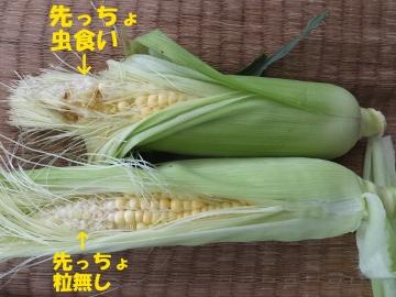 さつま芋植え27年終了11
