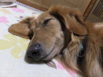 眠いかも2