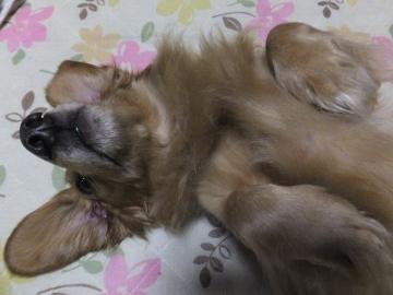 眠いかも4