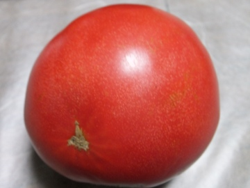 トマト青が赤へ8