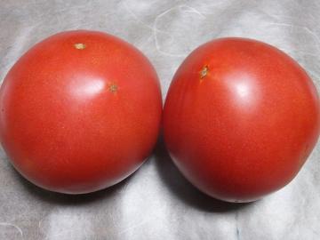 トマト青が赤へ9