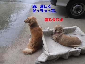 なぜか雨2