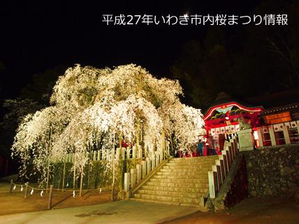 平成27年桜まつり