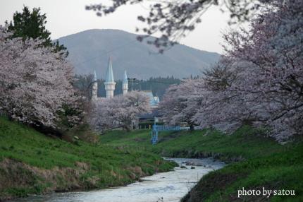 夏井の千本桜2