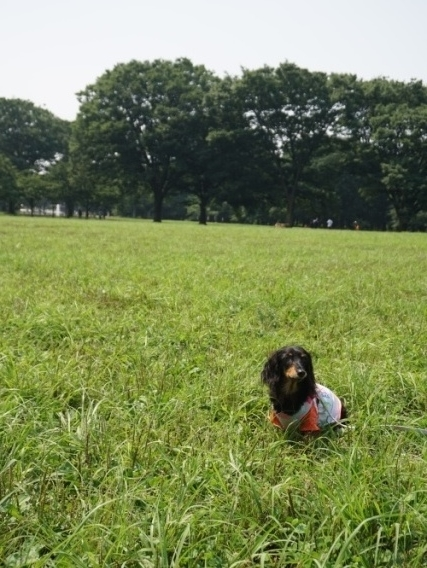 芝の上 (2)