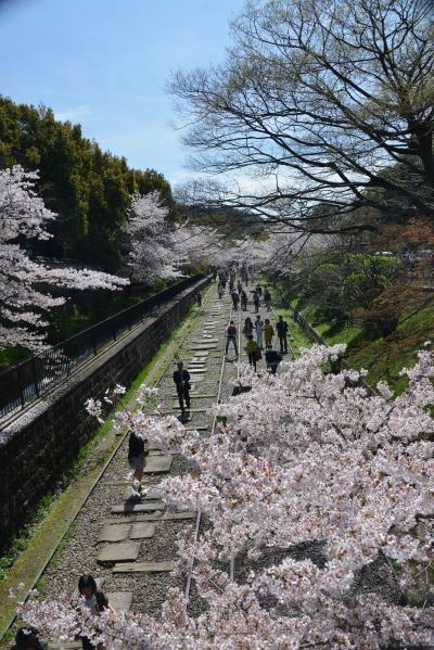 インクラインと桜