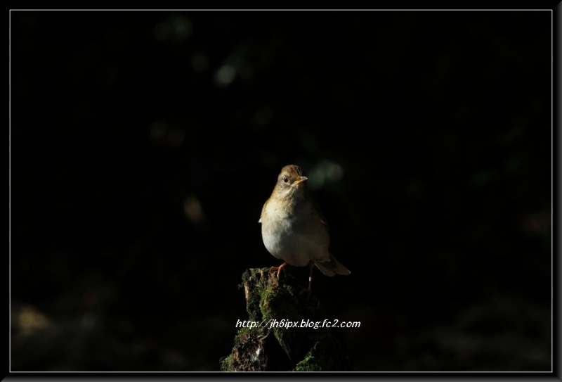 野鳥-blog