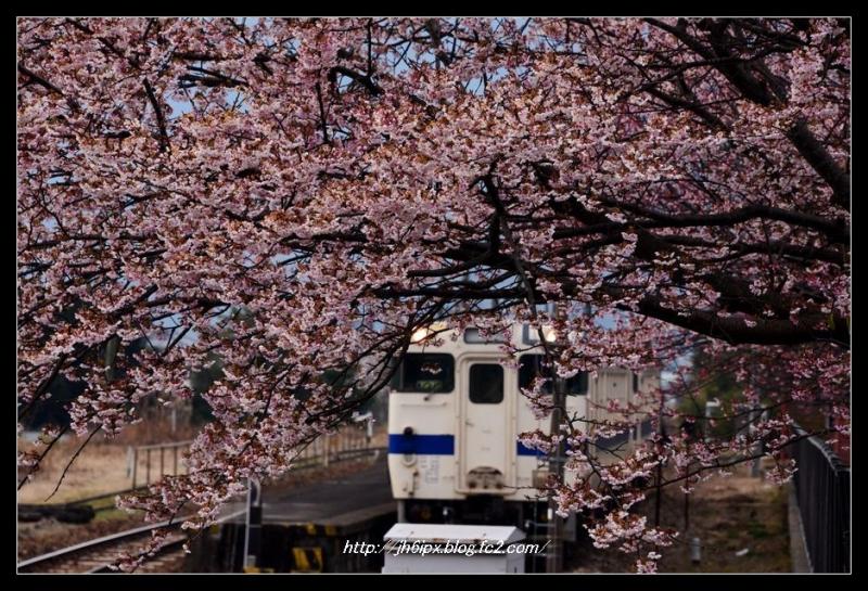 桜と電車(blog)
