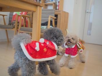 クリスマスパーティー12