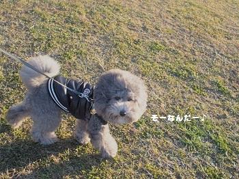 川さんぽ20150201-6