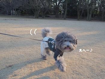 いつもの公園20150211-3
