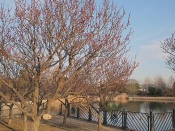 いつもの公園20150211-8
