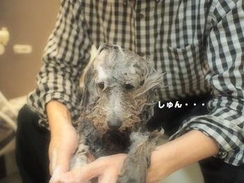 ばけつ風呂20150214-10