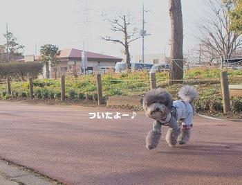 公園日記20150215-1