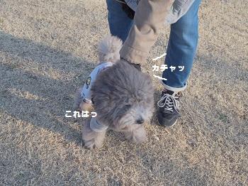 公園日記20150215-3