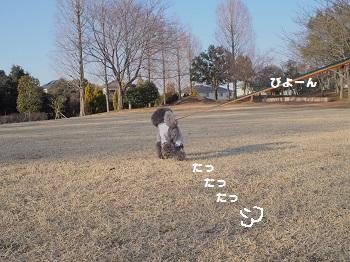 公園日記20150215-4