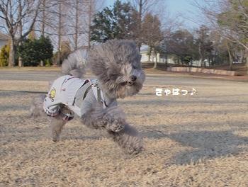 公園日記20150215-5