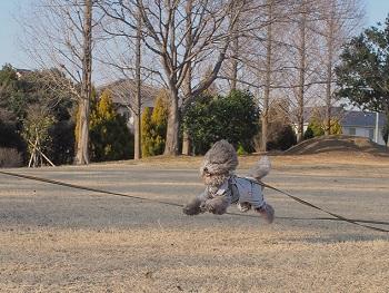 公園日記20150215-7