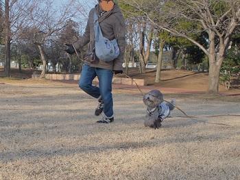 公園日記20150215-9