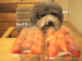 いちご直売6