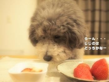 うちの子記念日デザート3