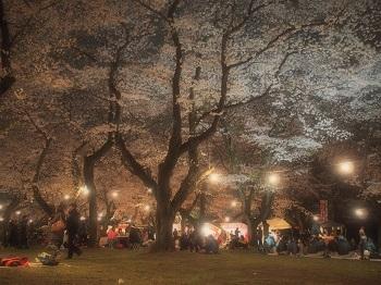 夜桜20150402-3