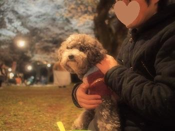 夜桜20150402-8