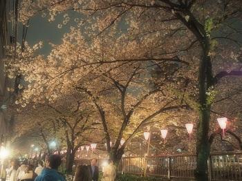 ジジさんin中目黒で夜桜さんぽ