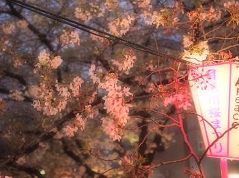 ジジさんin中目黒で夜桜さんぽ4