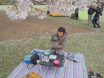 お花見20150404-2