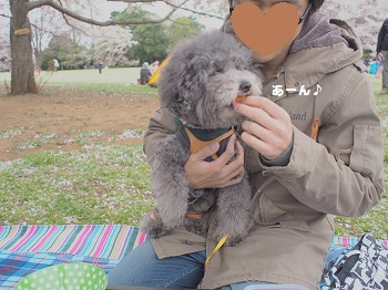 お花見20150404-5