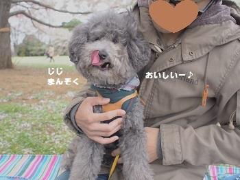 お花見20150404-7