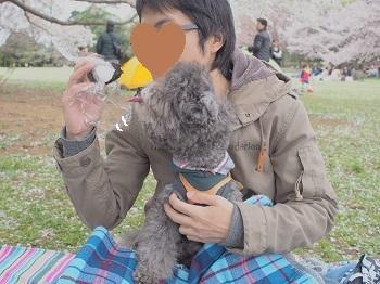 お花見20150404-8