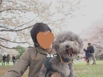 お花見20150404-9