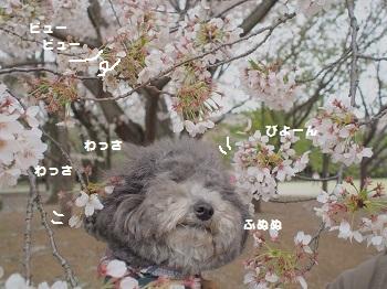 お花とジジさん2