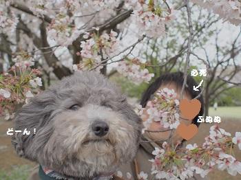 お花とジジさん3