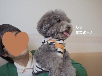 しろいぬカフェ20150412-2