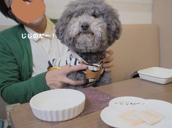 しろいぬカフェ20150412-6