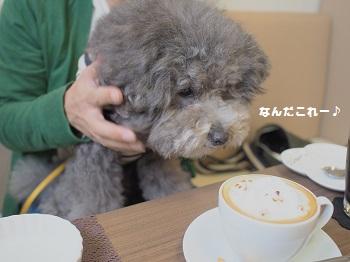 しろいぬカフェ20150412-11