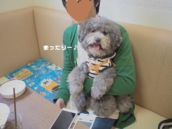しろいぬカフェ20150412-14