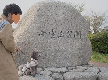 小室山20150416-1