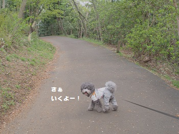 小室山20150416-6